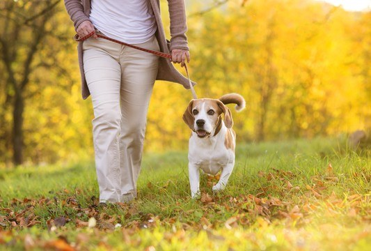 Pets Add Longevity and Add Comfort