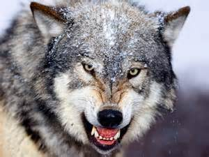 The Lurking Wolf in Retirement Planning