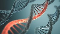 People today are interested in their ancestry. They use DNA testing to learn more about their family tree. However, health issues in your DNA may be used against you as you also plan for long-term care.